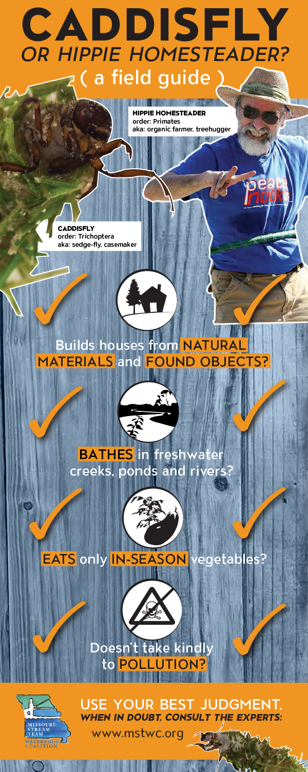 caddisfly infographic